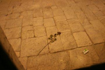 Een roos in de piombi, de gevangenis, doet nog steeds stille bewondering voor Casanova vermoeden